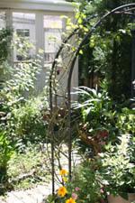 20090815庭.jpg