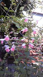 20090919実家庭.jpg